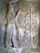 Sargon I, king of Mesopotamia who reigned c2334-c2279 BC. Founder of the Akkadian Semitic dynasty. Sargon standing before a tree of life. Stone relief. Louvre, Paris.