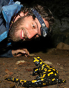 A nature research scientist looking closely at a Fire Salamander (Salamandra salamandra) in the wild