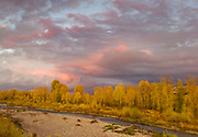 Narrowleaf Cottonwoods line the banks of the Gros Ventre River at Sunset, Grand Teton National Park, Wyoming