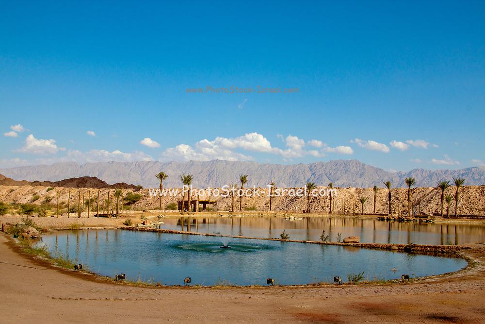Israel, the shore of the lake in Yeruham park in the Negev Desert