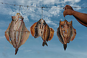 Drying Fish<br /> Macushi people<br /> Yupukari village<br /> Savannah, Rupununi<br /> GUYANA<br /> South America
