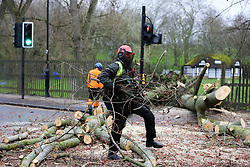 © Licensed to London News Pictures. 12/03/2019. London, UK. Staff from Haringey Council's park services clearing the tree from the road.<br /> A tree has fallen on Green Lanes in Haringey, North London due to strong winds. Green Lanes is closed between Manor House underground station and Endymion Road. Met Office is warning to prepare for rain and 80mph gales as Storm Gareth hits later today bringing the risk of heavy flooding. Photo credit: Dinendra Haria/LNP