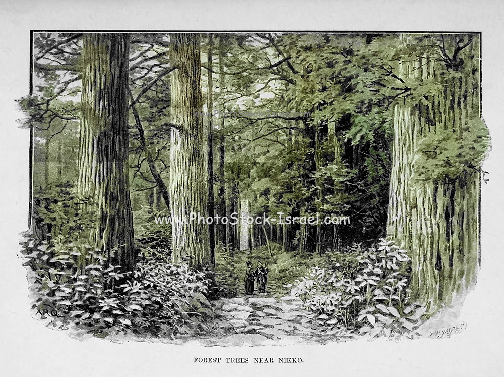 Machine colorized Forest Trees near Nikko from the book ' Rambles in Japan : the land of the rising sun ' by Tristram, H. B. (Henry Baker), 1822-1906. Publication date 1895. Publisher New York : Revell