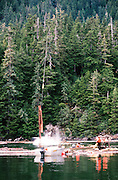 Alaska. Wrangell Island. Logging by helicopter with log pond and workers.