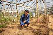 Som Kamar Megar, an ICS Alumni back in the village of Kaudi where he first did his placement. Som, now spends a lot of time in the community and has rented land from farmers and built himself 12 polytunnels for tomato production.  (Photo by Andy Aitchison/ICS)(Photo by Andy Aitchison/ICS)