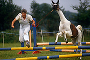 A strange scene of a lady in mid-air as she leaps over a series of horse show-jumping poles - not leading a pony, but a Llama in Ashdown Forest Llama Park, East Sussex. The animal is part of a herd of llamas and alpacas and is lead over the jumps as a show for visiting families. The Ashdown Herd of llamas and alpacas was started in 1987. Over the years the numbers have increased and in 1995 what is now the Park was purchased, and opened to the public in 1996. The Ashdown Herd of llamas and alpacas was started in 1987. Over the years the numbers have increased and in 1995 what is now the Park was purchased, and opened to the public in 1996. There are now more than 100 south-American llamas and alpacas plus reindeer from Sweden at the Park.