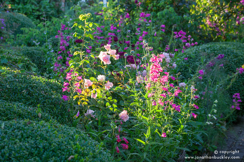 The rose garden with Rosa 'Felicia', Penstemon 'Just Jayne' and R. 'Tuscany Superb'