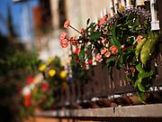 Flowers in a windowsill