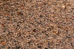 Cypress tree leaves in water on Cypress Creek near Comfort, Texas USA