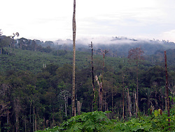April 3, 2004 - U.S. - EMBARGOED: NOT FOR USE UNTIL SEPTEMBER 5-- KRT WORLD NEWS STORY SLUGGED: BRAZIL-SLAVERY KRT PHOTOGRAPH BY KEVIN G. HALL/KRT (August 24) Clouds hug the jungle canopy about an hour outside of Trairao in Brazil's Amazon state of Para. Deforestation has made Trairao a major source of illegal wood, some of which ends up in the United States as planks for decks and docks and exotic hardwood floors. The Amazon rainforest is disappearing at a pace of about on Vermont-sized area per year. (lde) 2004 (Credit Image: © Kevin G. Hall/TNS/ZUMAPRESS.com)