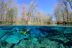 Halb Halb Aufnahme von Taucher in Quelltopf Ginnie Springs, split level picture from scuba diver in Ginnie Spring, Clear swelling pot, High Springs, Gilchrist County, Florida, USA, United States, MR yes, Februar 2014