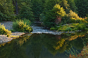 Riffle Below Little Grizzly Creek, Indian Creek, Genesee Valley, California Mountains, Alders, Willows, Fir Forest