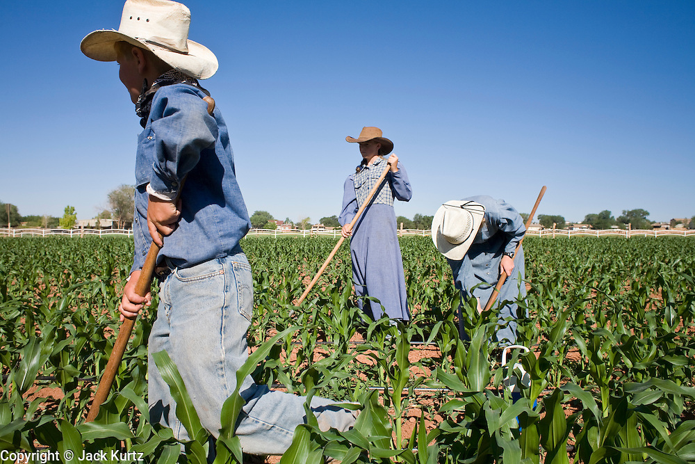 """June 16, 2008 -- COLORADO CITY, AZ: Members of the Jessop family, a polygamous family and members of the FLDS in Colorado City, AZ, weed the community corn field. The family grows about 30 percent of the food they consume and buy the rest at the town mercantile store. Colorado City and neighboring town of Hildale, UT, are home to the Fundamentalist Church of Jesus Christ of Latter Day Saints (FLDS) which split from the mainstream Church of Jesus Christ of Latter Day Saints (Mormons) after the Mormons banned plural marriage (polygamy) in 1890 so that Utah could gain statehood into the United States. The FLDS Prophet (leader), Warren Jeffs, has been convicted in Utah of """"rape as an accomplice"""" for arranging the marriage of teenage girl to her cousin and is currently on trial for similar, those less serious, charges in Arizona. After Texas child protection authorities raided the Yearning for Zion Ranch, (the FLDS compound in Eldorado, TX) many members of the FLDS community in Colorado City/Hildale fear either Arizona or Utah authorities could raid their homes in the same way. Older members of the community still remember the Short Creek Raid of 1953 when Arizona authorities using National Guard troops, raided the community, arresting the men and placing women and children in """"protective"""" custody. After two years in foster care, the women and children returned to their homes. After the raid, the FLDS Church eliminated any connection to the """"Short Creek raid"""" by renaming their town Colorado City in Arizona and Hildale in Utah.   Photo by Jack Kurtz"""