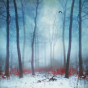 Forest in Winter with some leaves left on small trees - manipulated and texturized photograph
