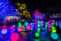 Blossoms of Light , one million lights illuminating the Denver Botanic Gardens during the holiday season, Denver, Colorado USA.
