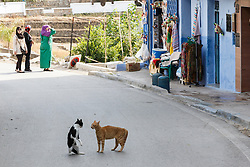 Cats in standoff on street, Chefchaouen, Morocco