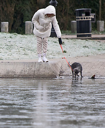 © Licensed to London News Pictures. 24/01/2021. London, UK. A woman walks her dog next to a pond frozen over in freezing conditions at Hampstead in north London. Parts of the UK continue to suffer from flooding caused by Storm Christoph. Photo credit: Ben Cawthra/LNP