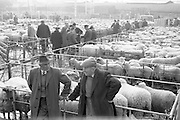 An early morning scene at the Dublin Cattle Market..25.04.1962