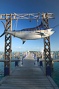 Giant marlin at the marina docks at Big Game Resort in Alice Town on the tiny Caribbean island of Bimini, Bahamas.