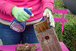 Clearing out and cleaning a bird box at the beginning of winter. Spraying with Jeyes fluid.