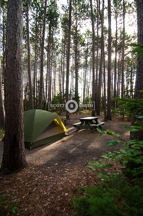 Camping among the towering red pines, known as cathedral pines in Cathedral Pines Campground.  The cars and tents give the scale of the trees proper perspective and respect.