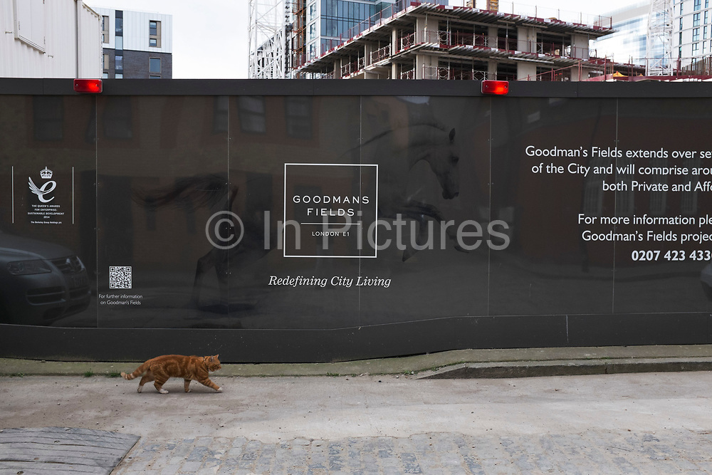 Cat walks past a hoarding to a building site, unaware that he is being mirrored by another, larger animal, a leaping horse. London, UK.