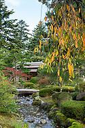 A stream lined with moss covered rocks and a stone bridge leading to the Shiguretei Tea House in the Kenrokuen Garden, Kanazawa, Ishigawa, Japan