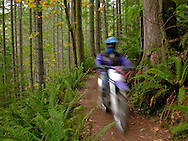 A dirtbike motorcyclist zooms by along a trail in the Green Mountain State Forest of Kitsap County, Washington, USA