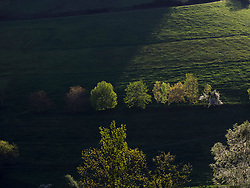 Scenic view of trees on green landscape of Black Forest, Yach Elzach, Baden-Wuerttemberg, Germany