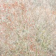 CMYK files boek Variations in Trees