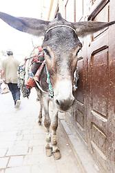 Donkey in Market, Fes al Bali medina, Fes, Morocco