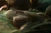 Copy of Watson and the Shark, by John Singleton Copley (1738 – 1815) American painter