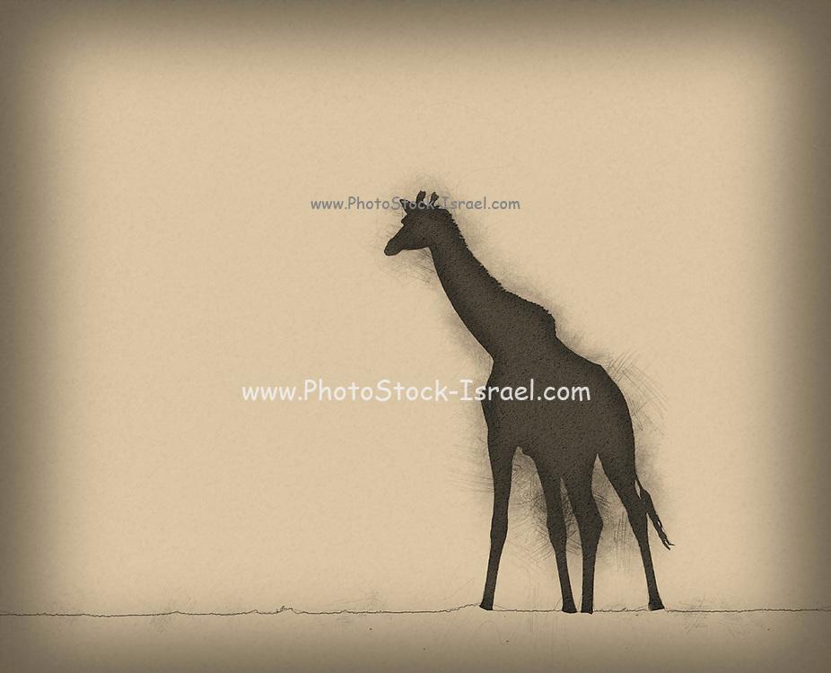 Digitally enhanced image of a silhouette of full body shot of a adult giraffe