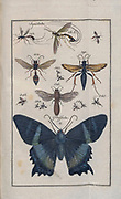 Insects, moths and Butterflies from a Latin  entomology textbook by Zschach, Johann Jacob. Printed in Leipzig in 1788