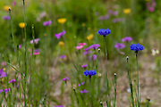 Field of colorful wild flowers in a Kyoto garden.