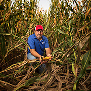Jeff Kirwan kneels next to stalks or corn damaged in a wind storm at his farm near New Windsor, Illinois. Nathan Lambrecht/Journal Communications
