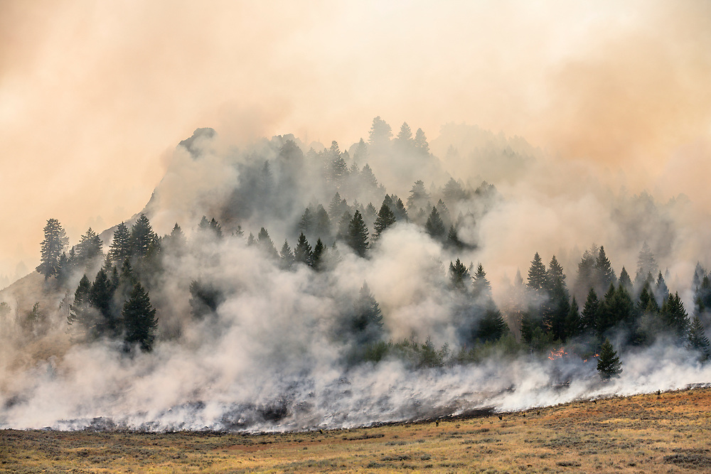 Fire fighter fight fire with fire as a raging fire moves like a living beast just north of Ketchum Idaho with the sun burning through the smokey clouds as trees go up in flames.  Licensing and Open Edition Prints.