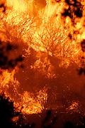 7 May 2009 - Santa Barbara, CA -  Heavy winds drive the Jesusita fire as it burns near, homes in the foothills of Santa Barbara, California. Photo Credit: Rod Rolle/Sipa Pres,  21 August 2009-Santa Barbara, CA: