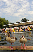 Henley, Great Britain. Geese sitting on the booms  turn their backs on the races  racing  at  2009 Henley Royal Regatta.  Wednesday 01/07/2009 [Mandatory Credit. Peter Spurrier/Intersport Images] . HRR.