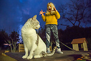 Young girl with tiger makeup mask is trying to scare her cat before going to a Purim party. model released