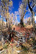 The remains of a prospector's cabin along Medano Creek, Great Sand Dunes National Park, Colorado USA