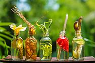 Food Lab Oil display 2