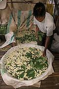 Silk culture<br /> Khasi Tribe<br /> Meghalaya,  ne India