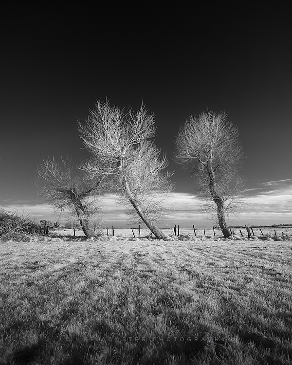 I gave a talk to the lovely people at Aldeburgh camera club the other night, and saw these rather nice trees catching the light in the car park so couldn't resist a couple of shots.