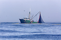 A purse seiner retrieves its gear and catch in Monterey Bay, California.
