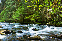 Salmon River Trail along the Wild and Scenic Salmon River, near Welches, Oregon.