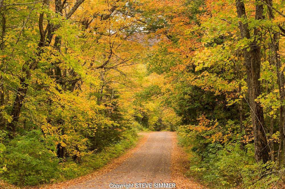 Many forest roads near the north shore have a mixture of hardwood species that turn color at slightly different times. This can make for a long sesaon of beautiful fall forests.