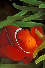 Papua New Guinea Underwater