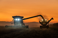 Rice Harvest in Richvale CATuesday, October 13, 2020.<br /> Photo Brian Baer