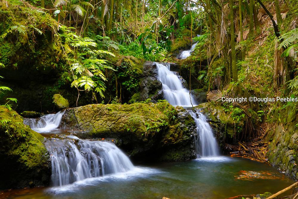 Onomea Falls, Hawaii Tropical Botanical Garden, Hilo, Hamakua Coast, Big Island of Hawaii